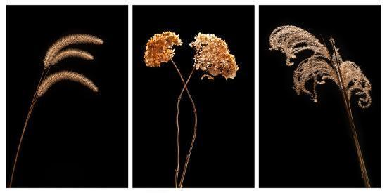 steve-gadomski-winter-garden-tryptich