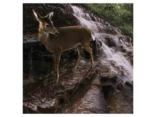 steve-hunziker-deer-falls