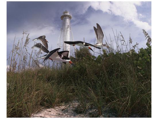 steve-hunziker-lighthouse-terns-i