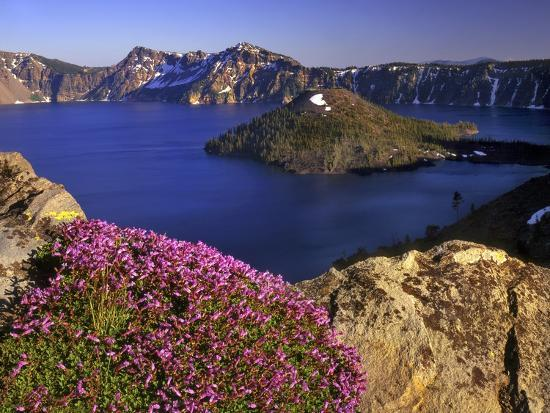 steve-terrill-penstemon-blooms-on-cliff-overlooking-wizard-island