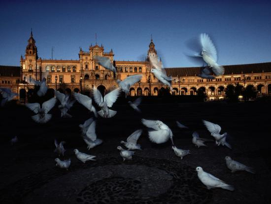 steve-winter-pigeons-in-a-square-in-seville