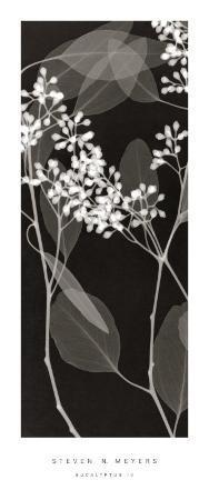 steven-n-meyers-eucalyptus-iv