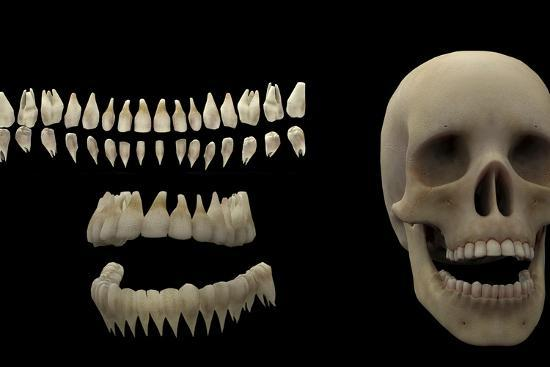 stocktrek-images-3d-rendering-of-human-teeth-and-skull
