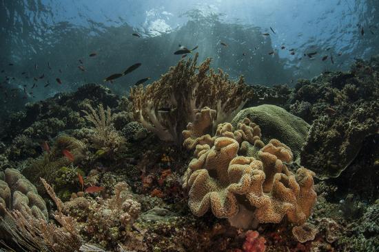 stocktrek-images-a-beautiful-coral-reef-grows-in-komodo-national-park-indonesia
