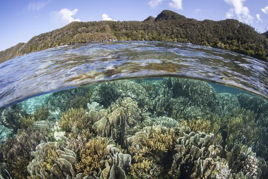 stocktrek-images-a-beautiful-coral-reef-in-raja-ampat-indonesia