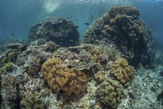 stocktrek-images-a-beautiful-coral-reef-thrives-in-komodo-national-park-indonesia