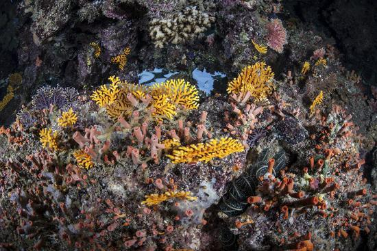 stocktrek-images-a-colorful-coral-reef-grows-along-a-deep-dropoff-in-the-solomon-islands