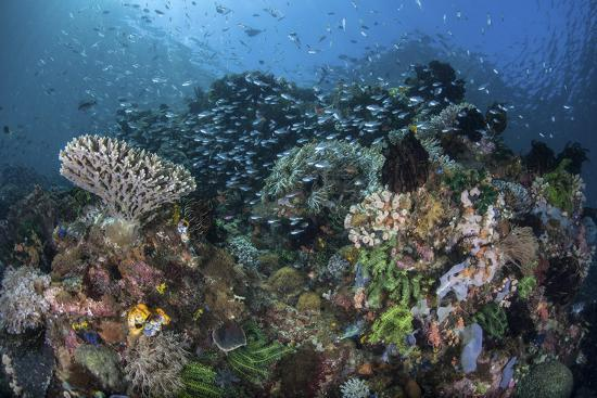 stocktrek-images-a-colorful-coral-reef-is-covered-by-fish-in-indonesia