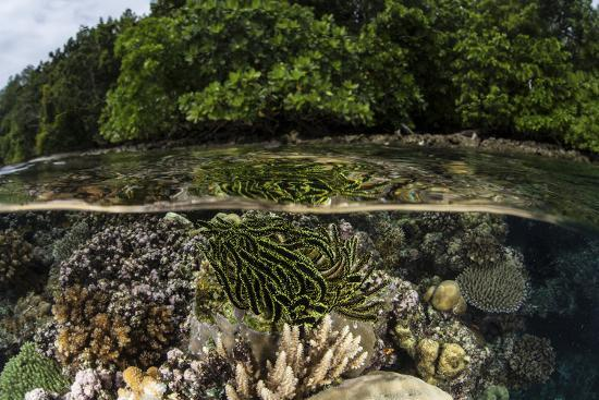 stocktrek-images-a-colorful-crinoid-clings-to-a-shallow-reef-in-the-solomon-islands