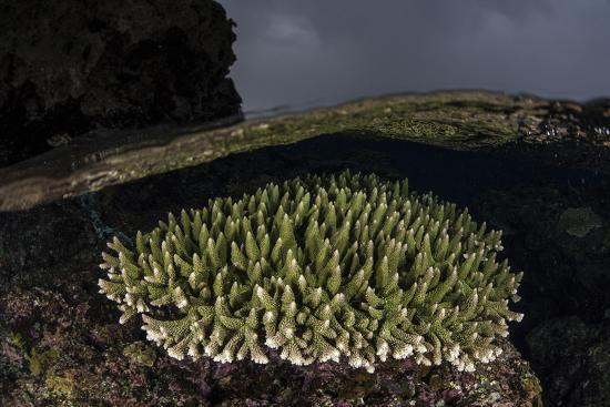 stocktrek-images-a-coral-colony-grows-in-shallow-water-in-the-solomon-islands