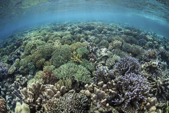 stocktrek-images-a-diverse-array-of-corals-grow-in-raja-ampat-indonesia
