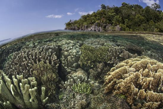 stocktrek-images-a-diverse-array-of-reef-building-corals-in-raja-ampat-indonesia