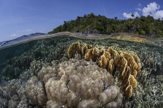 stocktrek-images-a-diverse-array-of-reef-building-corals-in-raja-ampat-indonesia