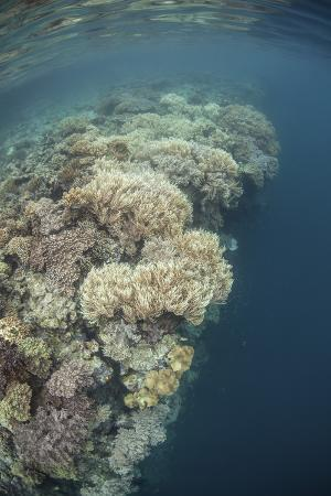 stocktrek-images-a-diverse-coral-reef-drops-into-deep-water-in-raja-ampat-indonesia