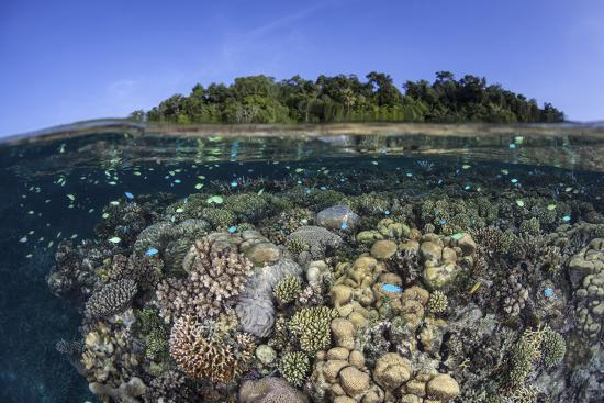 stocktrek-images-a-diverse-coral-reef-grows-in-shallow-water-in-the-solomon-islands