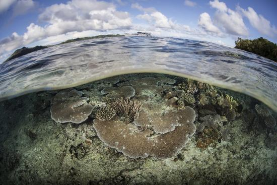 stocktrek-images-a-healthy-coral-reef-grows-in-the-solomon-islands