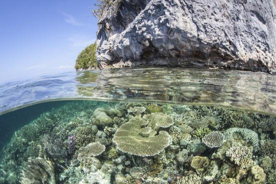stocktrek-images-a-healthy-coral-reef-grows-near-limestone-islands-in-raja-ampat
