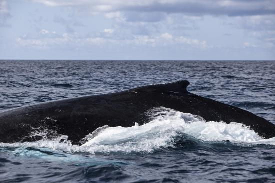 stocktrek-images-a-large-humpback-whale-swims-at-the-surface-of-the-atlantic-ocean