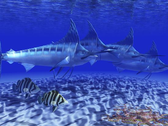stocktrek-images-a-pack-of-blue-marlin-swimming-with-two-siamese-tigerfish