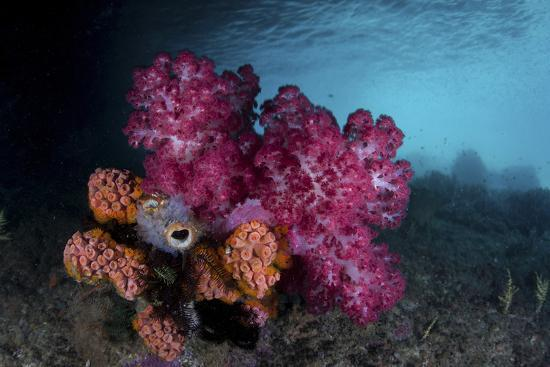 stocktrek-images-a-soft-coral-colony-and-invertebrates-in-raja-ampat-indonesia