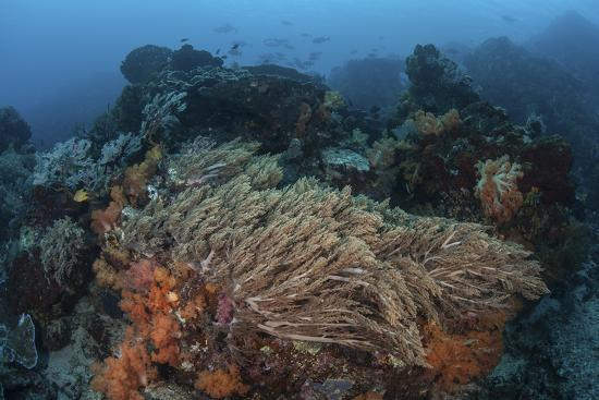 stocktrek-images-a-strong-current-sweeps-across-a-reef-slope-in-indonesia