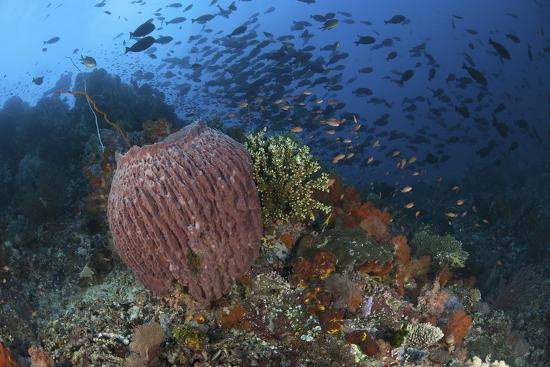stocktrek-images-bright-sponges-soft-corals-and-crinoids-in-a-colorful-komodo-seascape