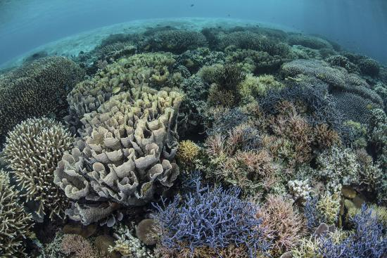 stocktrek-images-colorful-corals-near-the-island-of-alor-indonesia