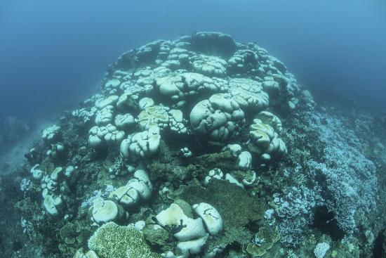 stocktrek-images-corals-are-beginning-to-bleach-on-a-reef-in-indonesia
