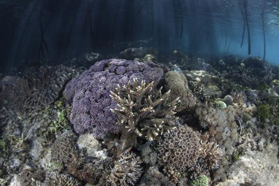 stocktrek-images-corals-grow-along-the-edge-of-a-mangrove-forest-in-raja-ampat