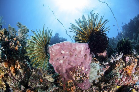 stocktrek-images-crinoids-cling-to-a-large-sponge-on-a-healthy-coral-reef