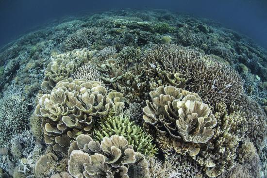 stocktrek-images-delicate-reef-building-corals-in-raja-ampat-indonesia