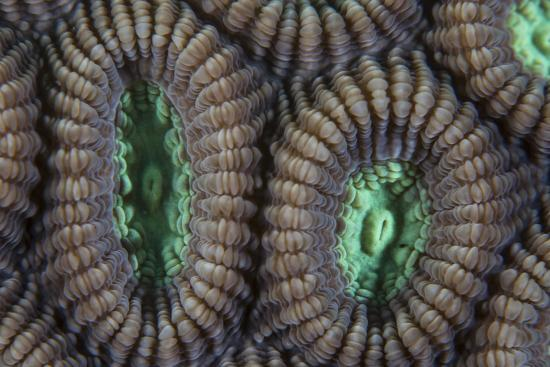 stocktrek-images-detail-of-coral-polyps-on-a-reef-in-lembeh-strait