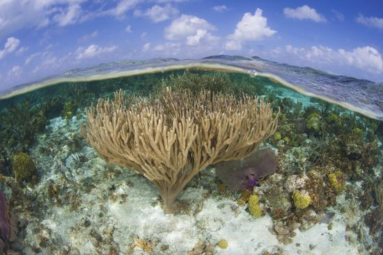 stocktrek-images-gorgonians-and-reef-building-corals-near-the-blue-hole-in-belize