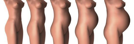 stocktrek-images-growth-of-female-midsection-during-pregnancy-stages