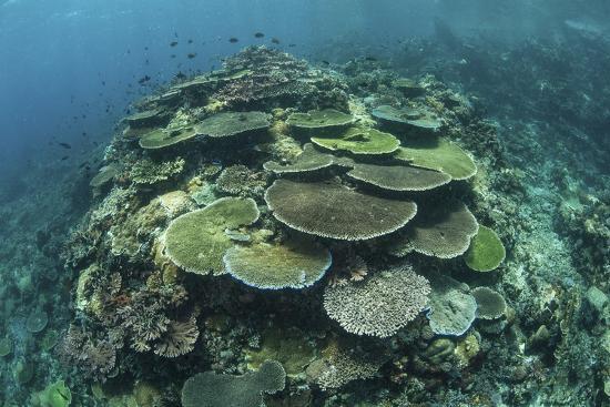 stocktrek-images-healthy-reef-building-corals-thrive-in-komodo-national-park-indonesia