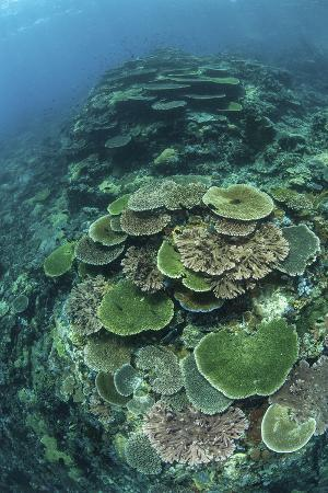 stocktrek-images-healthy-reef-building-corals-thrive-in-komodo-national-park-indonesia