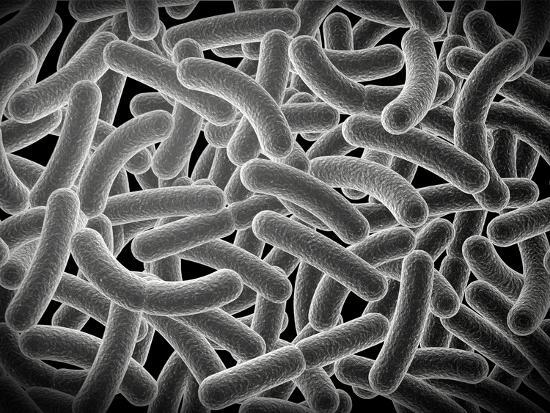 stocktrek-images-microscopic-view-of-bacilli-bacteria