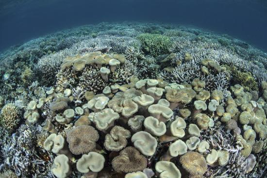 stocktrek-images-mushroom-and-hard-corals-in-alor-indonesia