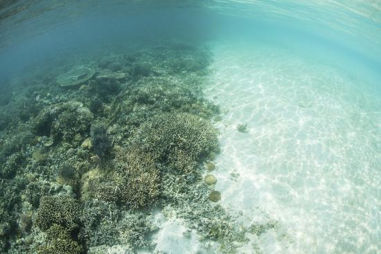 stocktrek-images-reef-building-corals-are-encroached-upon-by-a-sand-bank-in-indonesia