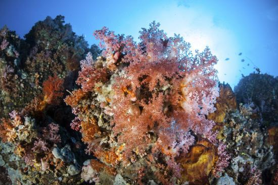 stocktrek-images-soft-corals-and-other-invertebrates-grow-on-a-reef-in-indonesia