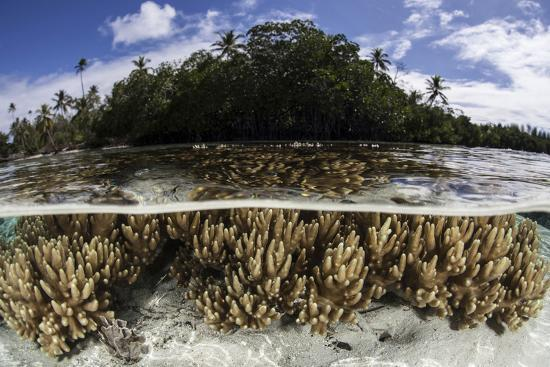 stocktrek-images-soft-leather-corals-grow-in-the-shallow-waters-in-the-solomon-islands