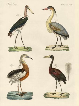 strange-birds