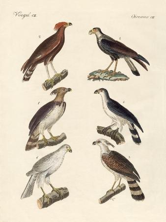 strange-eagles