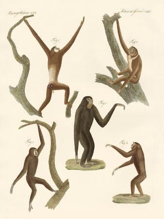strange-gibbons