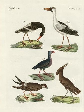 strange-marsh-birds