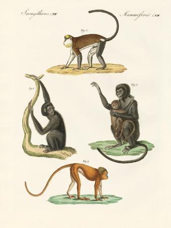 strange-monkeys