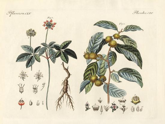 strange-plants