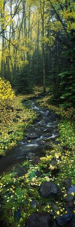 stream-flowing-through-forest