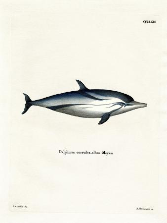 striped-dolphin