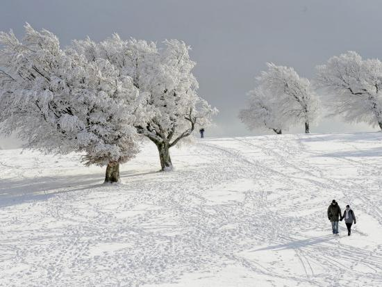 strollers-passing-snow-covered-trees-on-the-mountain-schauinsland-in-the-black-forest-germany